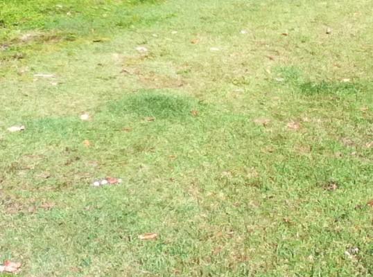 Encore une nouvelle pelouse au stadium de toulouse for Recherche tonte de pelouse